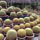 Cactus Valley @ Cameron Highlands